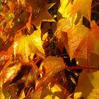Soussaba Diallo Pinterest Profile Picture