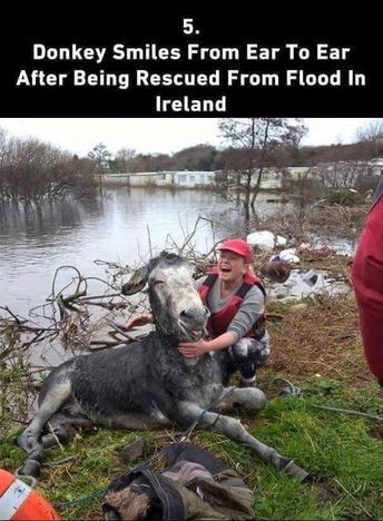a little faith in humanity restored
