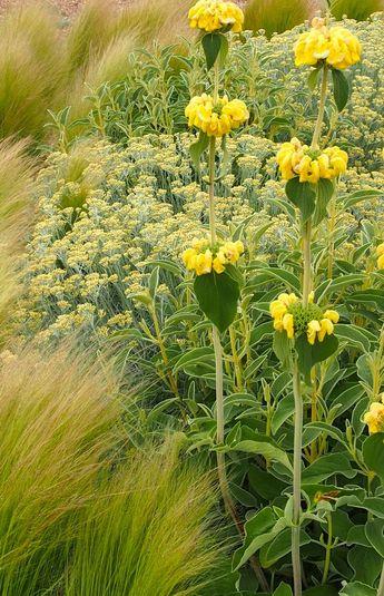 Dianthus gratianopolitanus, Lavandula 'Hidcote', Cistus ladanifer, Teucrium fruticans, Rosa sp. Festuca glauca