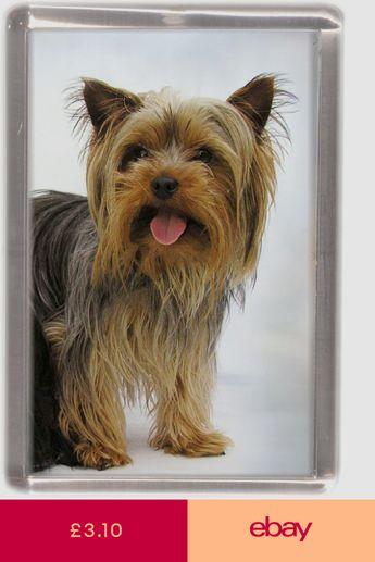 "Lancashire Heeler Dog Fridge Magnet /""I may not be perfect ......../"" by Starprint"