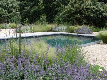 Graminés et piscine