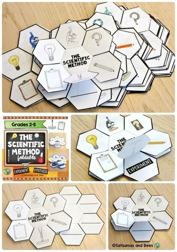 Scientific Method Activity Foldable For Any Experiment