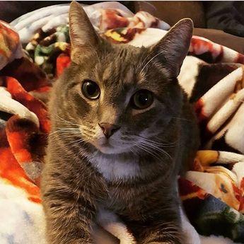 Im such a handsome boy! 😻🐾 #pets #meow  #kitty #followforfollow #pet #followforfollow #animal #catlife #ilovemycat #catsagram #cutecats #catlove #catlov