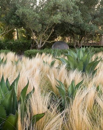 Garden Grasses Enchanting And Adorable For Special Moments