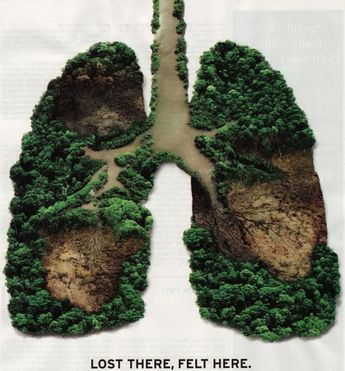 The rainforests are the lungs of the earth. Trees provide a carbon sink for 20% of the world's carbon. With increased deforestation, CO2 levels increase. redd-monitor.org