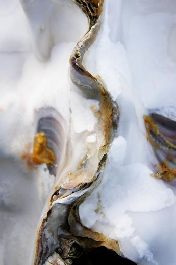 oyster texture