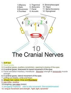 Normal Lab Values You Need to Know in Nursing School  Click