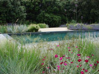 Graminés en bord de piscine