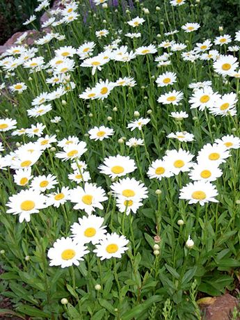 The Best Perennials for Your Yard