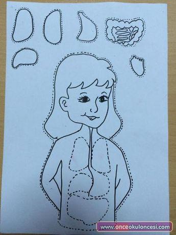 Diagram Of Tongue For Children The Five Senses