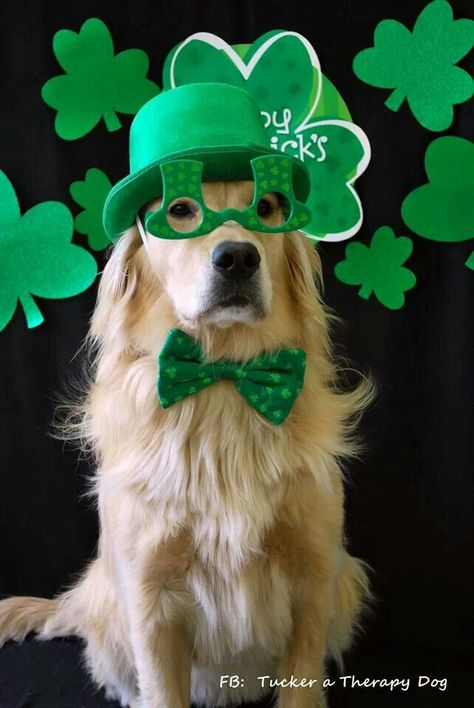 Green Dog.. #saint+patrick+dog