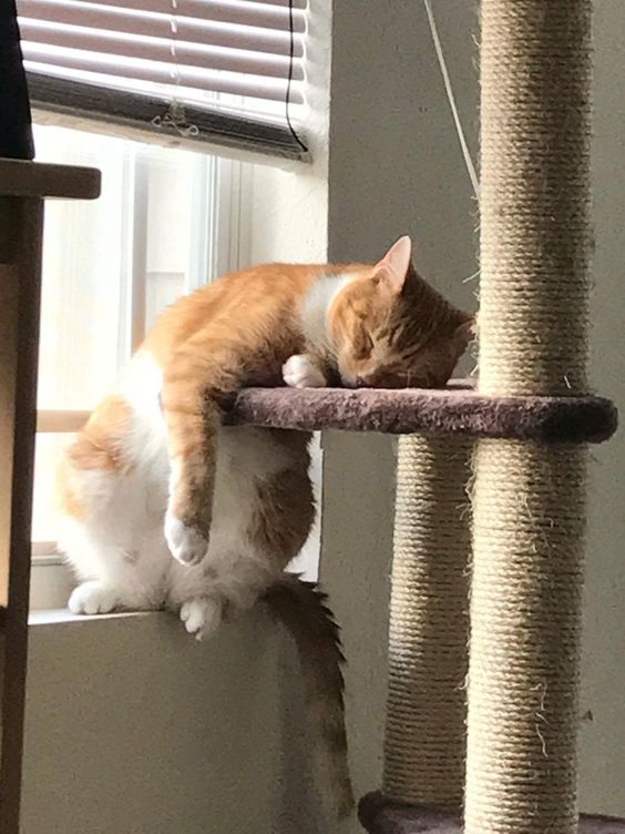 My sister's cat seemed to have a long day. : cats