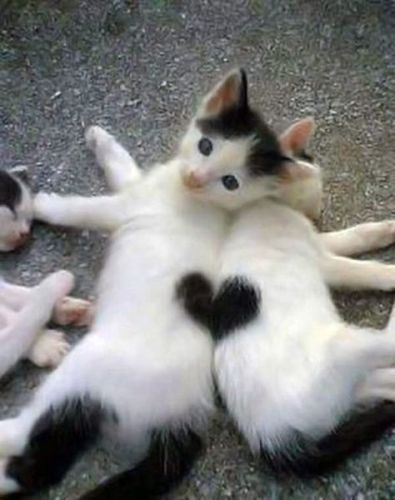 Happy valentines day to you and your cats!  Red Oak Apartment Homes in New Hampshire is pet friendly. We offer dog friendly options at some of our Manchester and Milford locations. Cats are accepted at every Red Oak apartment. Call us at 603-668-8282. Www.redoakproperties.com.