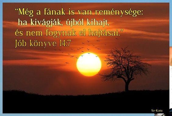 """""""Még a fának is van reménysége: ha kivágják, újból kihajt, és nem fogynak el hajtásai."""" Jób könyve 14:7"""