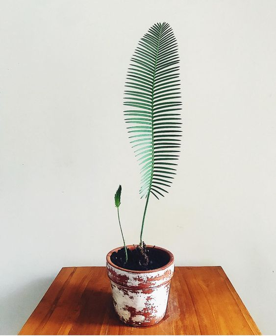 L'image contient peut-être: plante