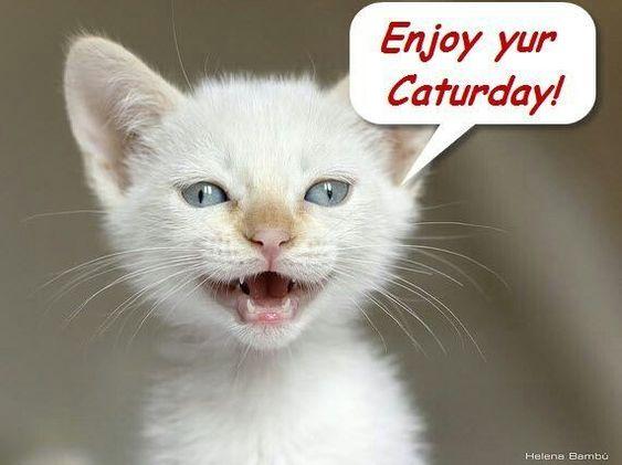 Enjoy yur Caturday!
