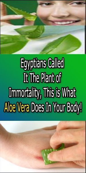 Aloe Vera may be a plant with a large array of medicative properties. thanks to this, it's been referred to as the plant of immortality and because the wand of heaven to the Native Americans.