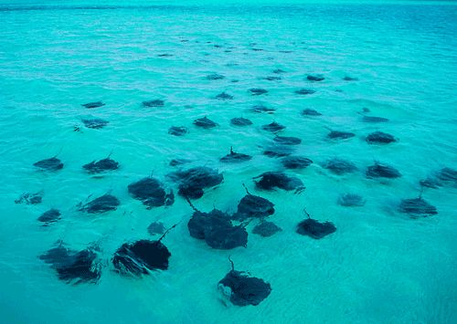 Stingray City, Grand Cayman. One of the most beautiful and majestic places I have ever visited!