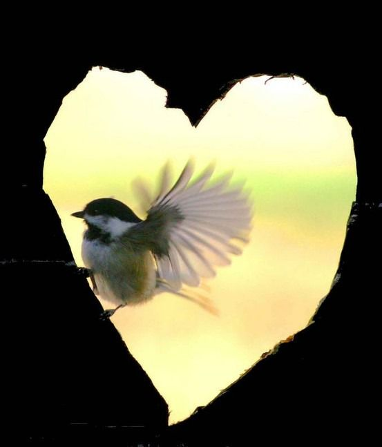 Heart and bird