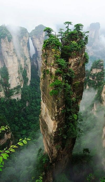 The Greatest Challenges, stand tall. Forest. Thailand.