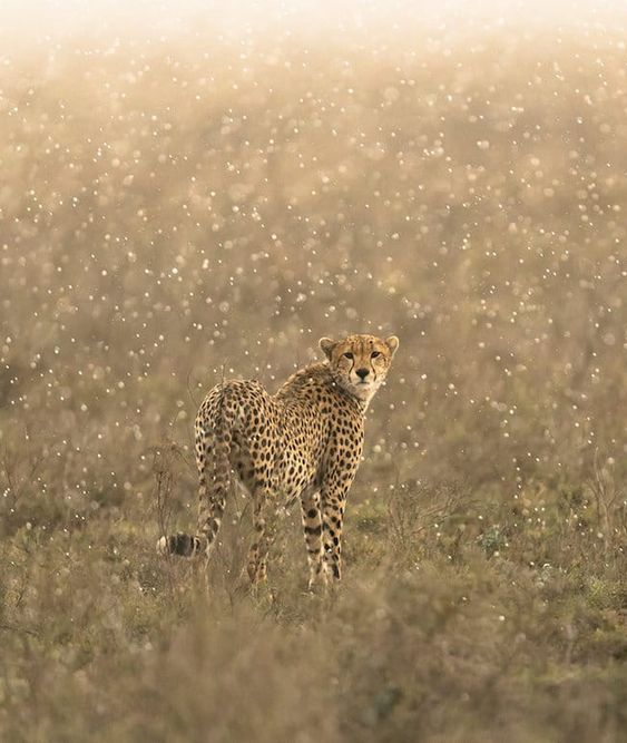 See George Turner's stunning wildlife photography and stay tuned for new work, as he's just returned from a trip to Namibia and plans to visit more African countries—as well as the Arctic—in the next year.