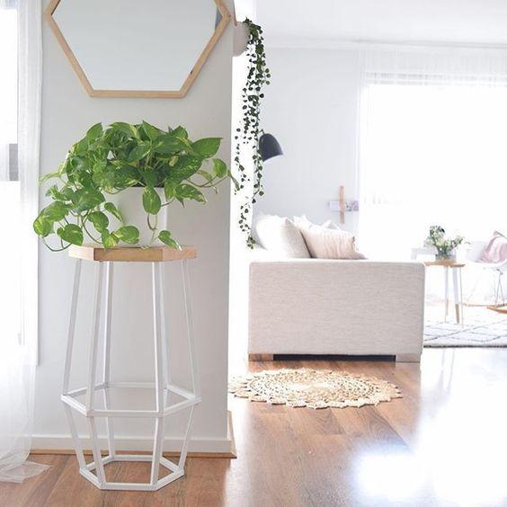 jiboia na decoracao plantas para ambientes internos