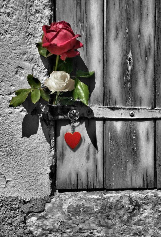 #roses #heart #colorsplash