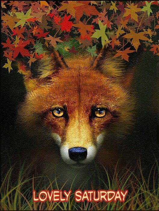 saturday fox