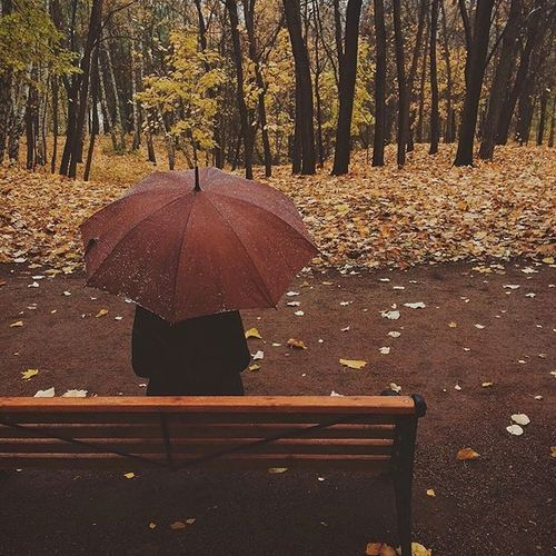 Discovered by smile. Find images and videos about autumn, fall and leaves on We Heart It - the app to get lost in what you love.