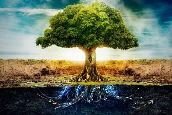 Studie vindt dat bomen gevoelens hebben, vrienden maken en op elkaar letten zoals een oud echtpaar - Mystical Raven