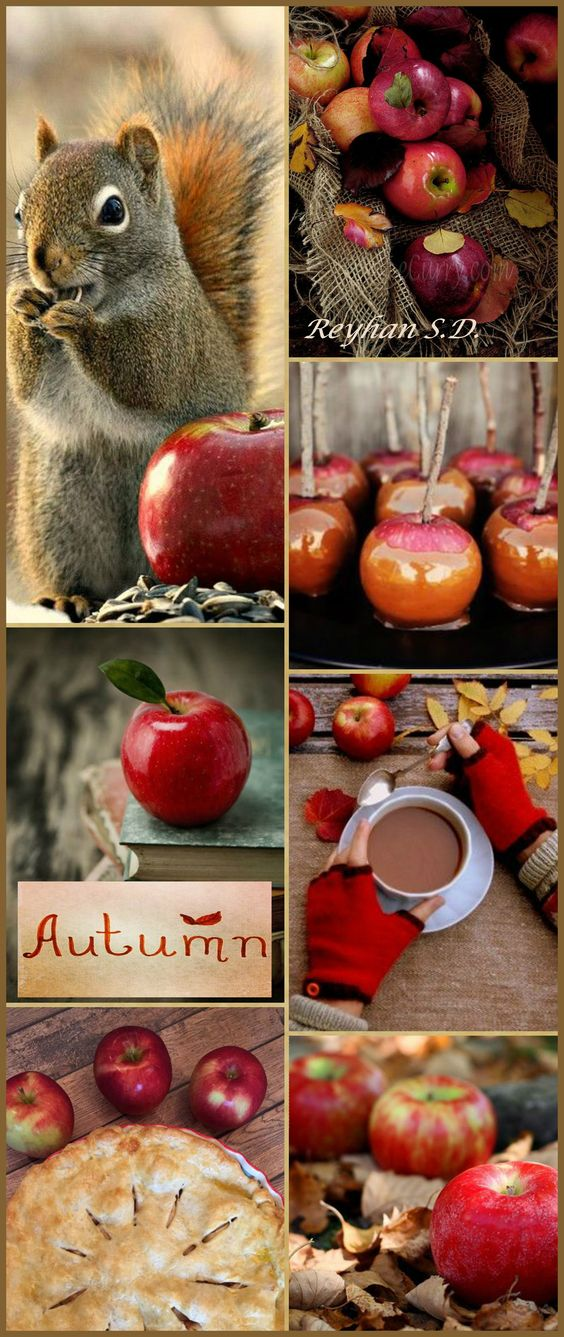'' Autumn- Apple Time '' by Reyhan S.D.