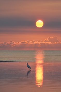 Under a Southern Sun - A dawn shot of an Egret fishing in tidal pools …