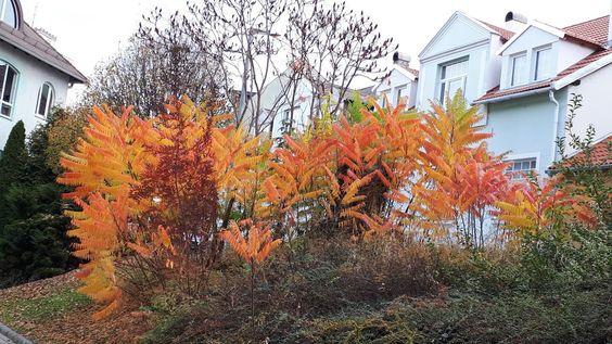 gyönyörű, színes növények kiemelik a vakolat szépségét