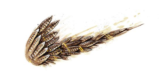 NIKE鳥の羽