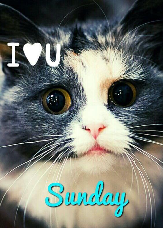 I love you Sunday